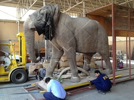 removal of the elephanf from the box